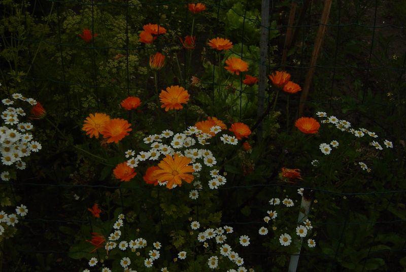 photosblog015.jpg