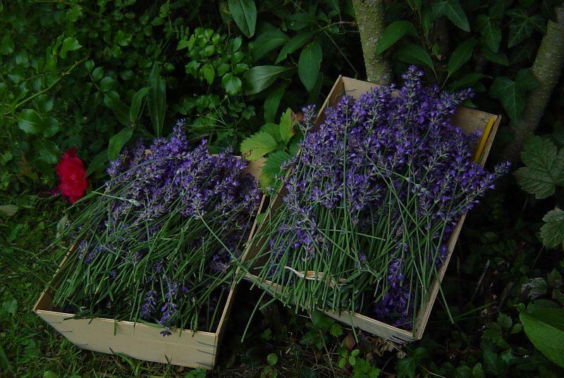 photosblog017.jpg